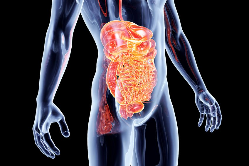 Enteric Brain - Gut Feeling