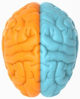 Left (Male) & Right (Female) Brain Hemispheres - Moderation and Balance in Life