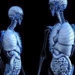 Human Body Basal Metabolic Rate (BMR) Resting/Passive Metabolism