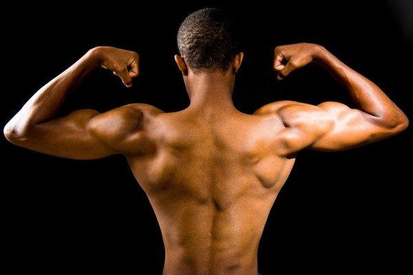 Metabolism - Muscle Mass versus Fat