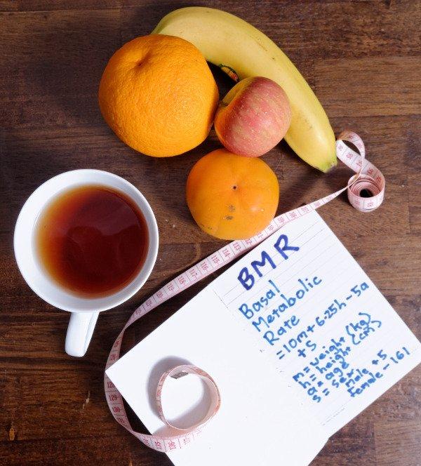 Passive Versus Active Metabolism - Basal Metabolic Rate