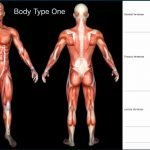 Insights from Gnosis: What Is My Body Type? Genetics/DNA and The Four (4) Body Types
