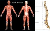 Genetics/DNA and Body Types - What is My Body Type - Standard Scientific Human Body Anatomy Book Body Type One (BT1)