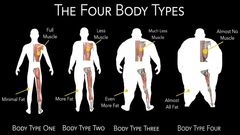 image of the four body types