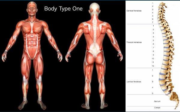 Standard Scientific Human Body Anatomy Book Body Type One (BT1) - Body Mass Index (BMI)